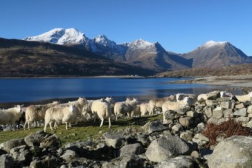 Sun, Snow, Sheep – Skye